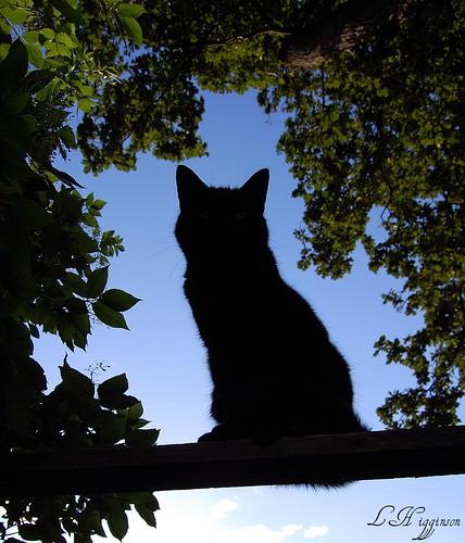 Cat Tree On Sale Ajax Ontario