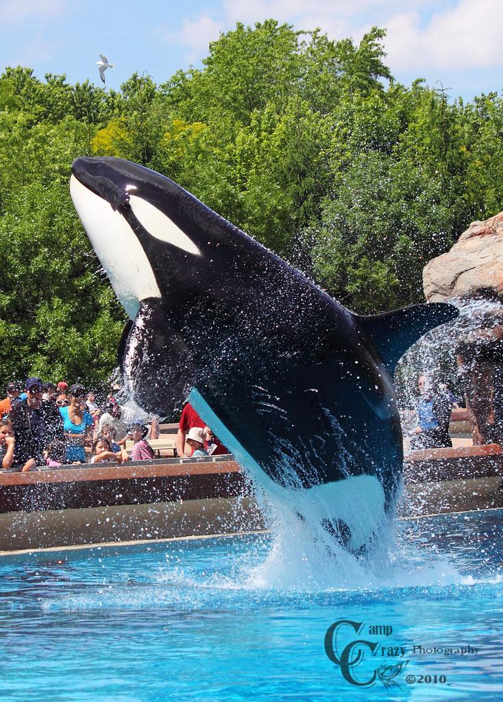 Killer Whale Show @ Friendship Cove Marineland #9 | © All ...