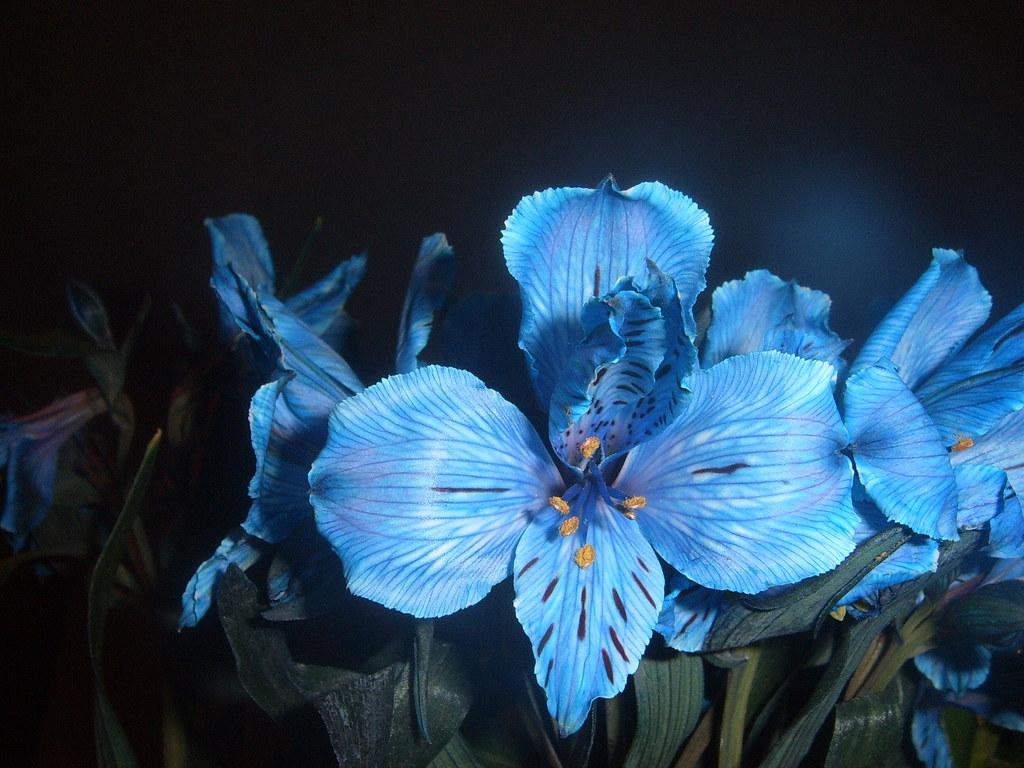 What Is Voodoo >> azul nocturno   esta flor se llama astromelia y me gustó ...