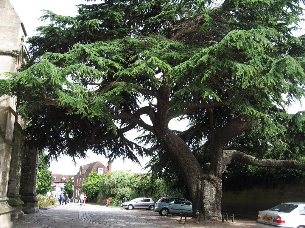 tree scale