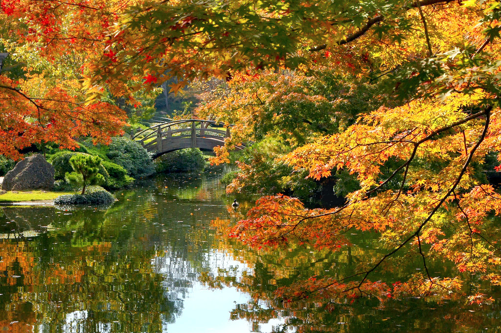 Fall foliage japanese garden fall colors are about to for Japanese garden colors
