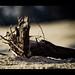 Roots (_DSC7212)
