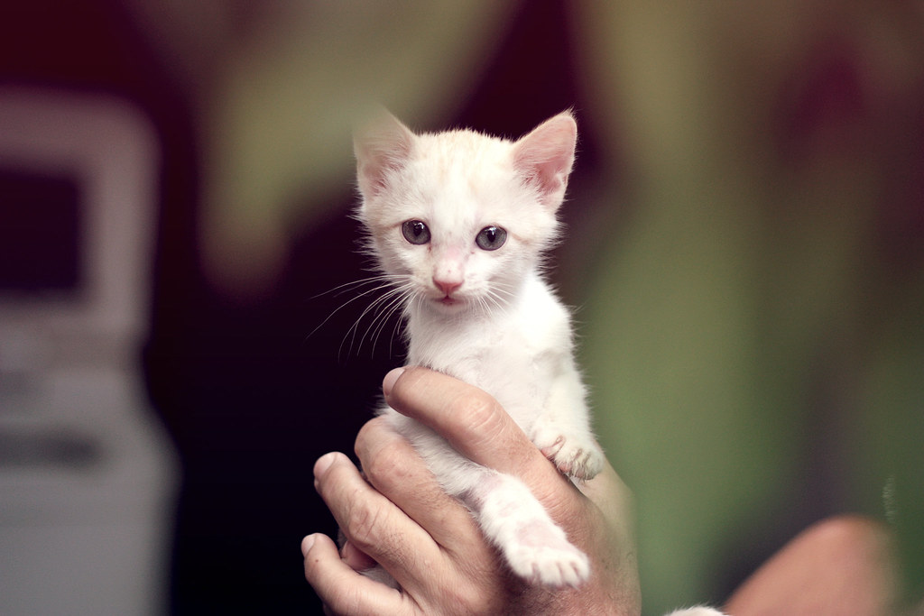 Petting A Cat Can Be Dangerous To Your Health