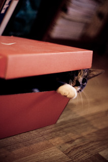 onni the cat (in a box) | by ansik