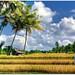 Bali Rural Idyll