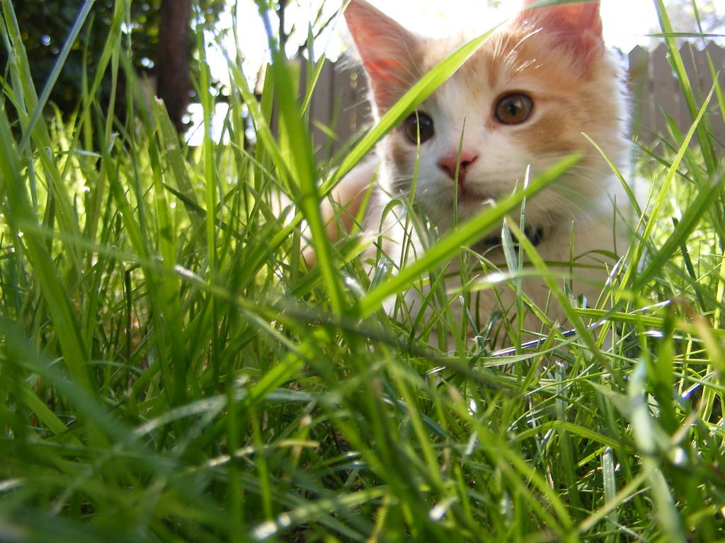 Savannah Cat Care Uk