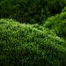 Them Green Hills
