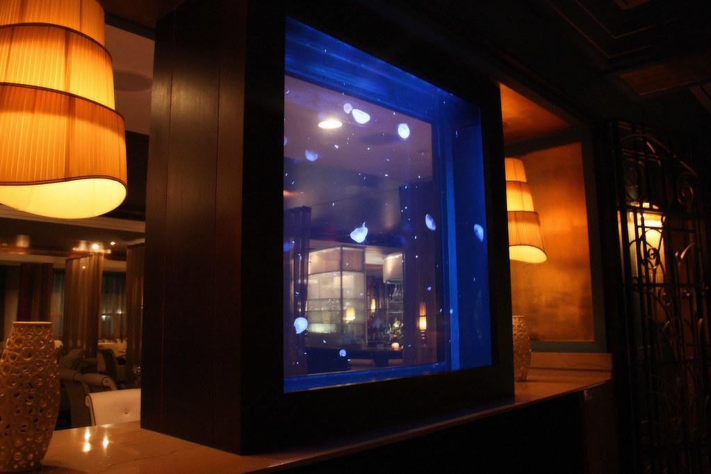 Jellyfish aquarium miami medeya flickr for Dream of fish tank