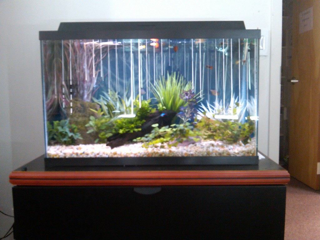 30 gallon freshwater aquarium this is a basic freshwater for 30 gallon fish tanks