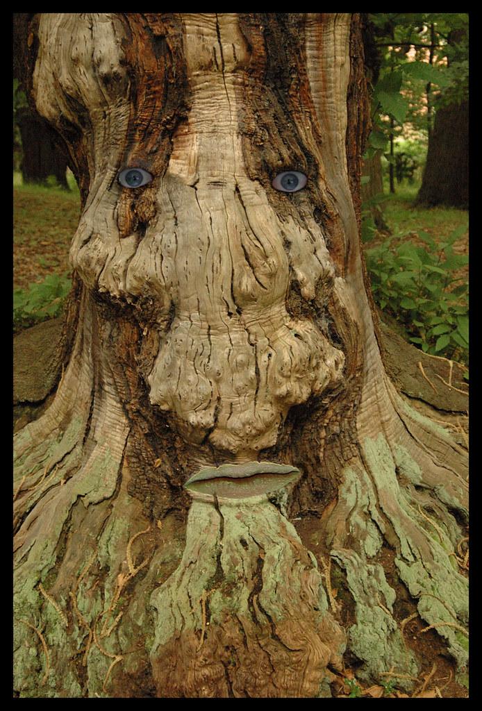 Les murs ont des oreilles et les arbres ont des yeux - Les murs ont des oreilles ...