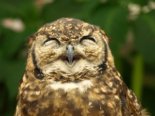 owl's smile!! :) | by merec0