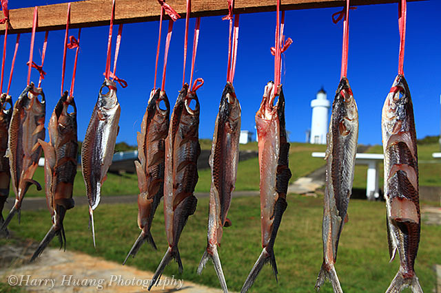 1_MG_6420-曬飛魚-飛魚乾-達悟族-雅美族-曬魚乾-食物-傳統-飛魚祭-飛魚季-蘭嶼燈塔
