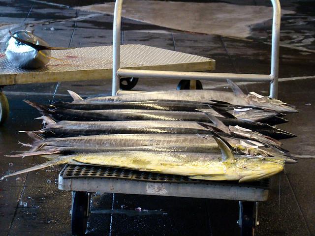 Suisan fish flickr photo sharing for Suisan fish market