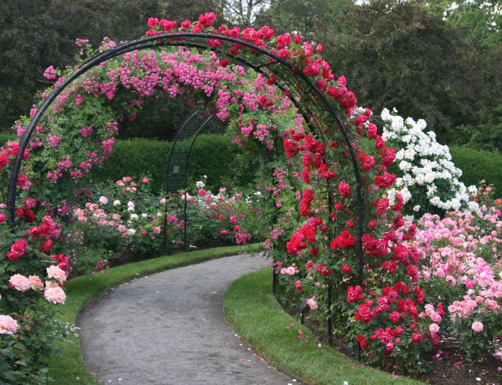 Посадка цветов в саду 13 фотография