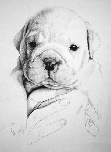 Bulldog Drawing Part 5 | Crikey... This is taking me AGES ...