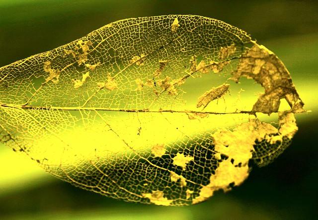 Fall season greetings golden leaf explore 2 on oct 5 flickr fall season greetings by xenox m4hsunfo