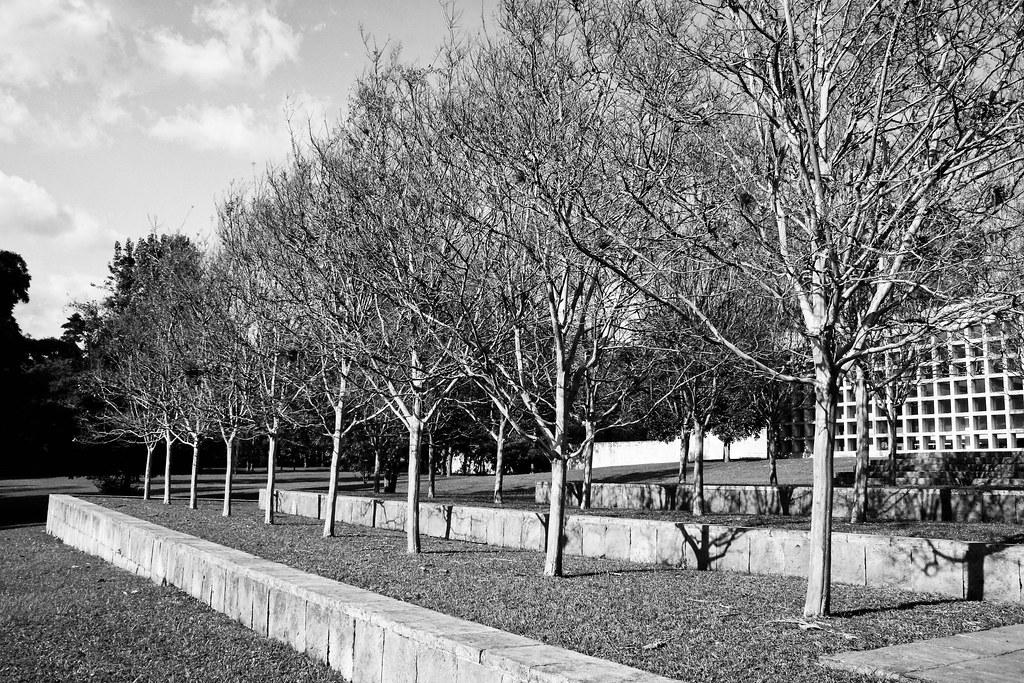 Arbolitos blanco y negro jardin del museo de - Arbolitos para jardin ...