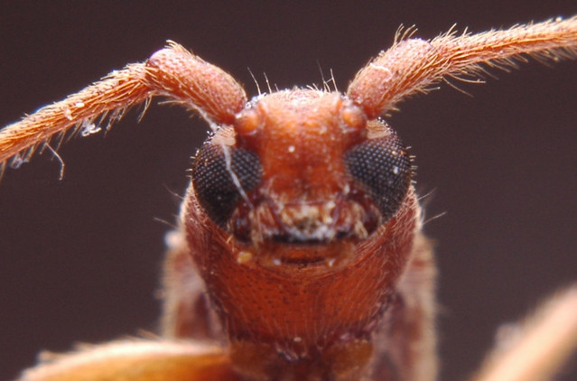 Insect Face Insect Face | by