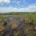 Swamp Bog, Marion County, Georgia 1