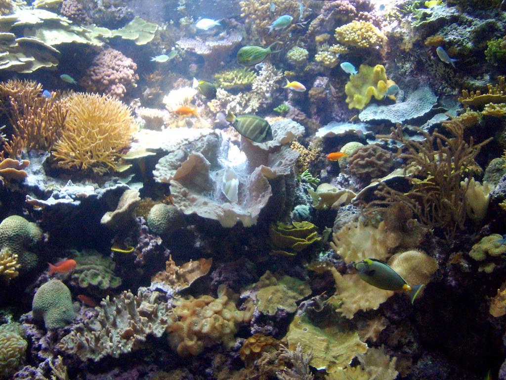 Coral Reef Taken In Shedd Aquarium Chicago Illinois