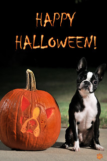 Happy Halloween from Bessie! | by Photography South