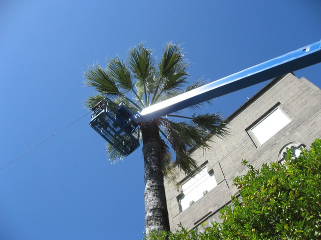 palm tree trimming machine