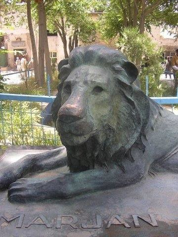 Marjan The Blind Lion This Lion Lived Through The