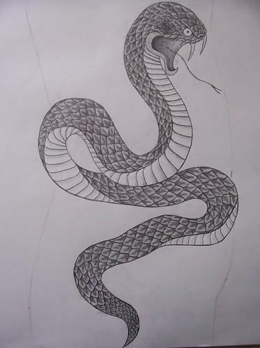 Snake Flickr Photo Sharing