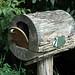 Log Mailbox