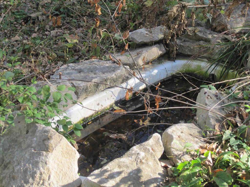 Bathtub fish pond nancy silvers flickr for Bathtub fish pond