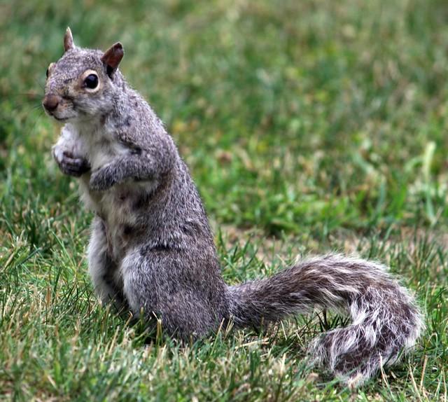 squirrel mature personals Mature content mature content  salty squirrel hattonslayden 42 14 mature  wild singles hattonslayden 82 22 battle bunny bounds hattonslayden 98 17 mucha .