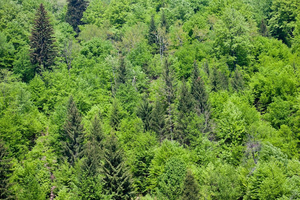 Image Result For A Forest For