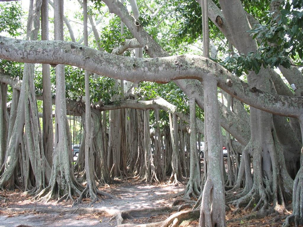 Banyan Tree at Edison Home Ft Myers Fl-13 | lee leblanc ...