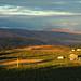Organic Berry Farm - Yakima