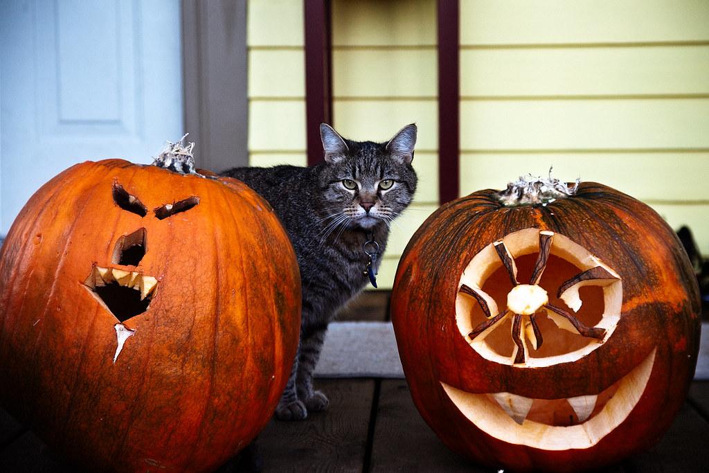 Pumpkin cat pumpkin really like the left one jason for Cat carved into pumpkin