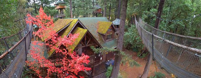 Treesort Panorama