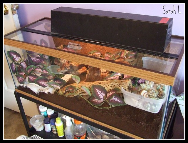 how to clean hermit crab tank