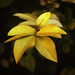 #201 Yellow leaves