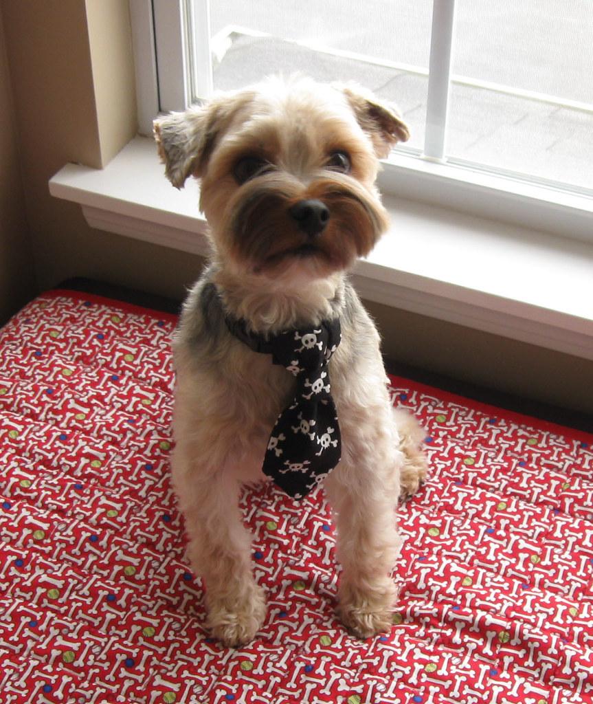 Dog Tie   Little Dog Tie Tutorial on my blog ...