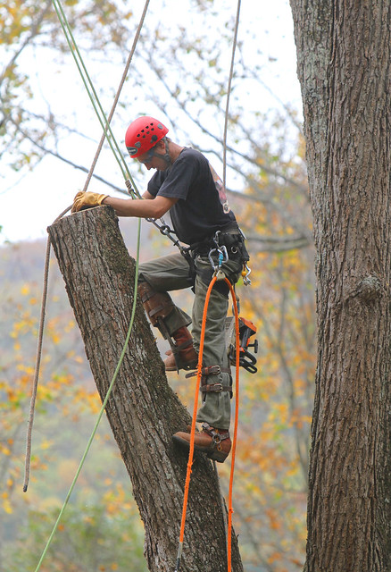 how to become an arborist in bc