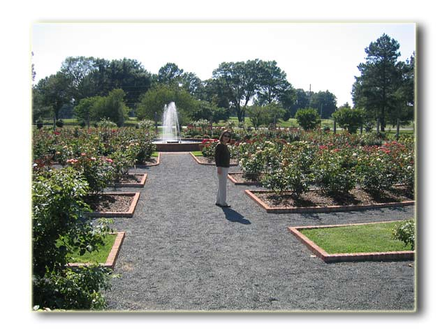 Rose Garden Memphis Botanical Gardens Richard Bitting