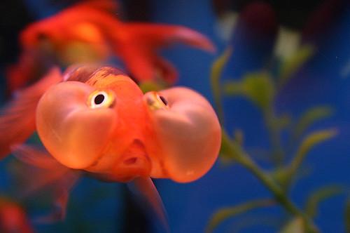 Petco fish for Petco saltwater fish