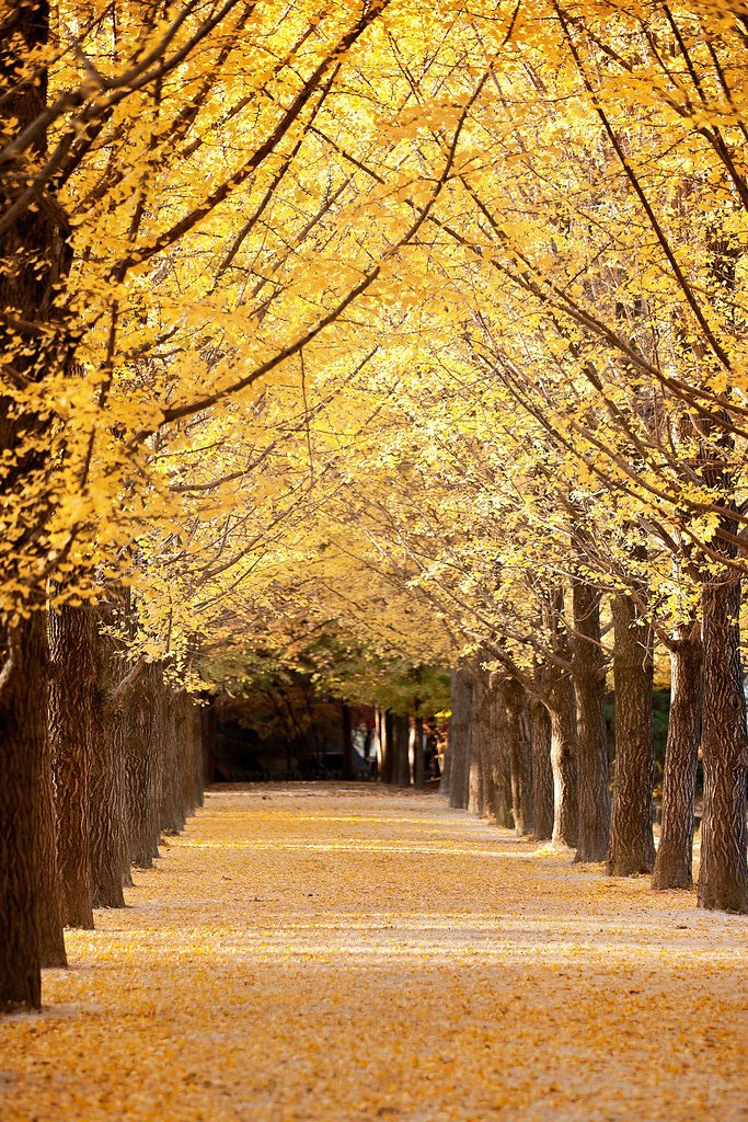 Image result for nami island autumn