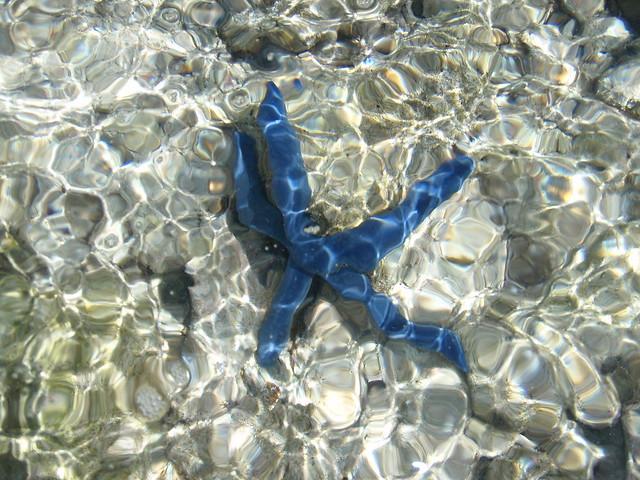 Real starfish underwater - photo#5