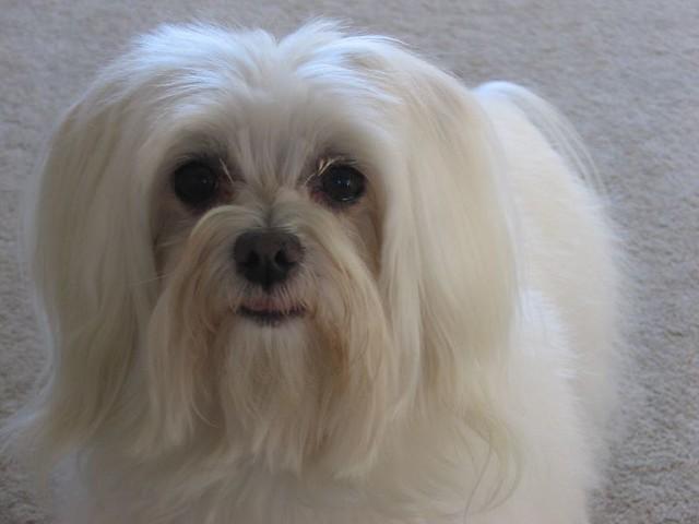 Gizmo dog | New addition. We now have Gizmo Dog and Gizmo ...  Gizmo dog | New...