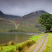 Lake buttermere tree
