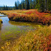 Autumn in wetland meadows of Lewis River valley, 3 of 3