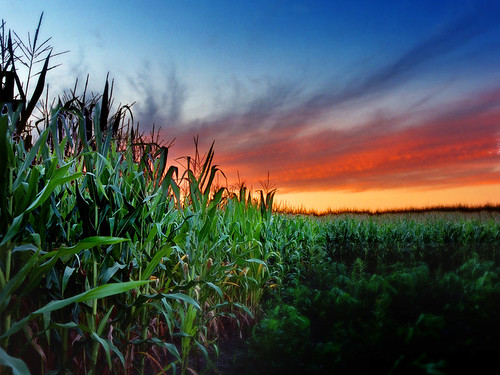 Cornfield sunset | Flickr - Photo Sharing!