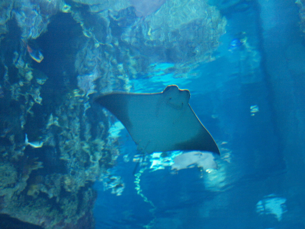 Galveston Texas Moody Gardens Aquarium Pyramid 2010 exhibi Flickr