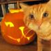mittens_pumpkin